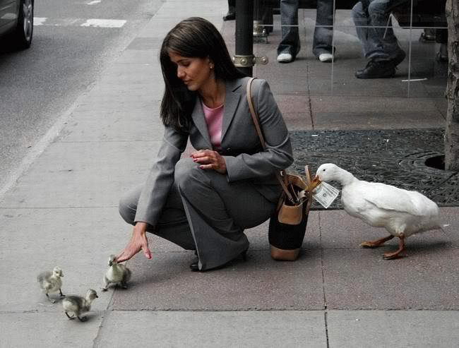 PickPocket Gang Ducks