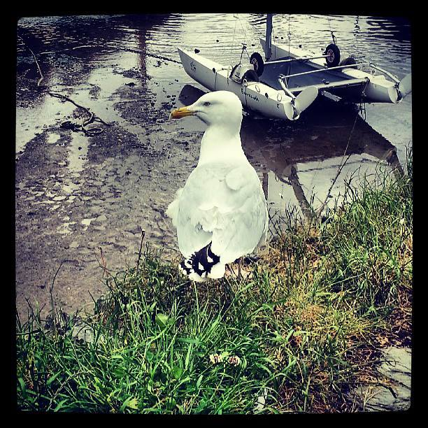 from ewass92 on instagram A seagull from my travels