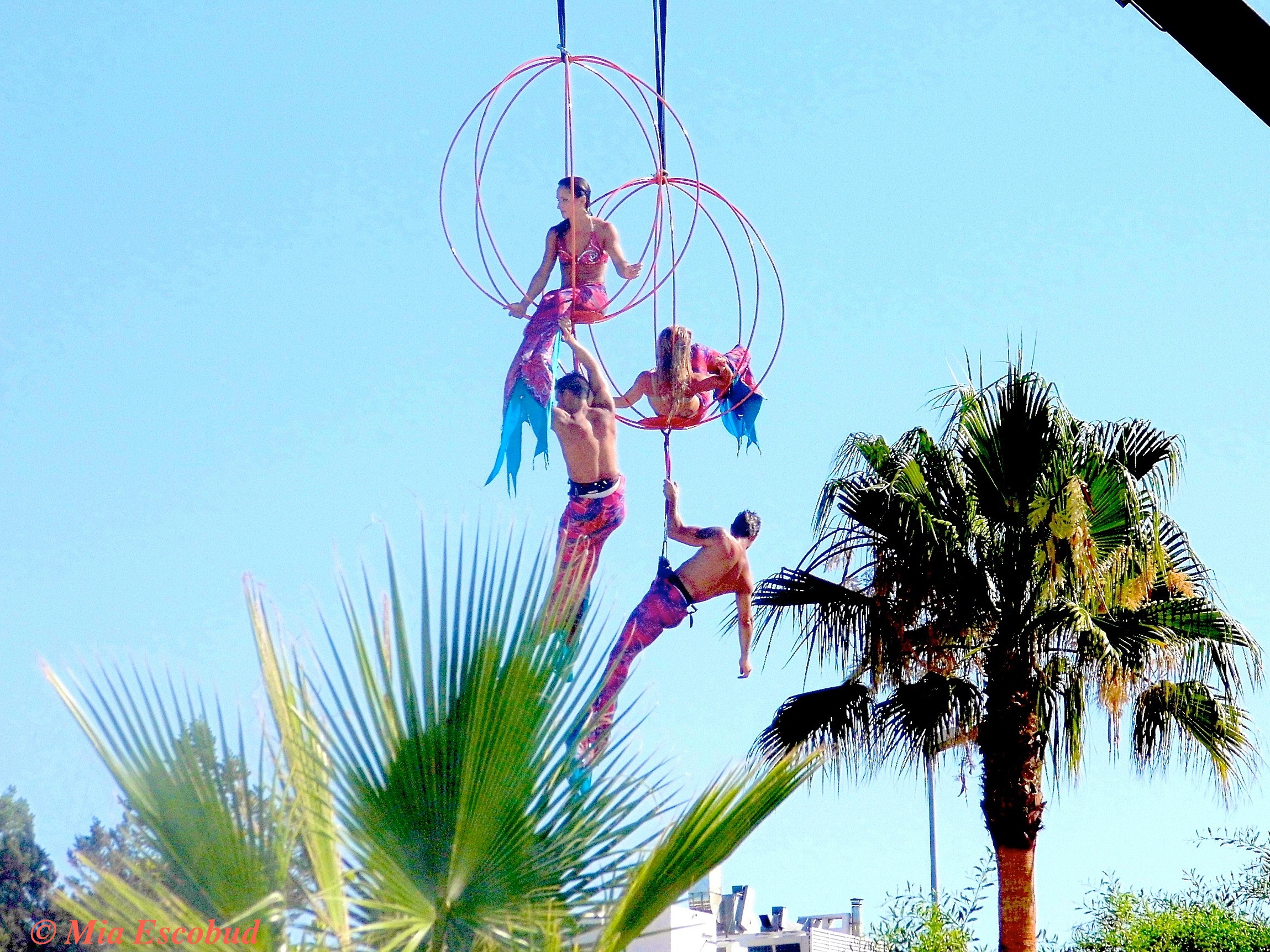 Ocean Beach Mermaids High Among the Ibiza Palms!