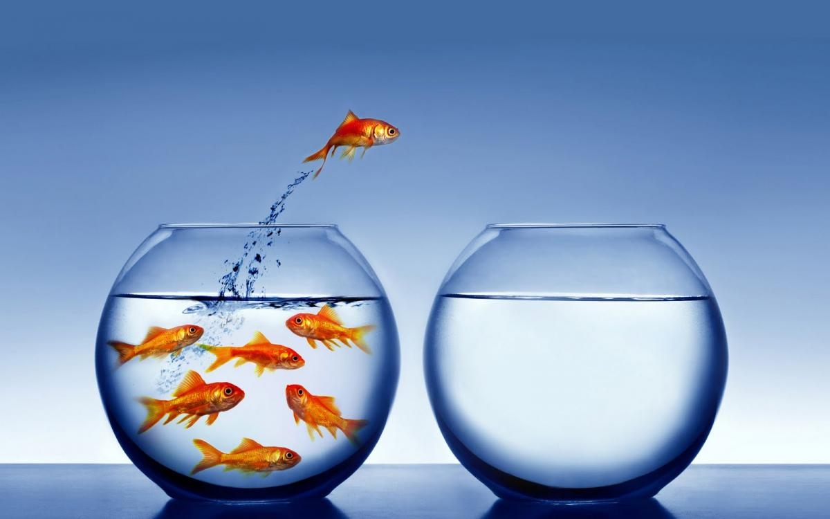 Goldfish Bowls Illustrating the Introvert and Extrovert Personalities
